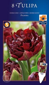 Pilnavidurės tulpės Palmyra svogūnėliai, 8 vnt., 12/+, 618402