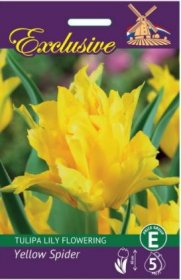 Tulpės EXCLUSIVE YELLOW SPIDER lily flowering 12/+ 5 svog., 3361