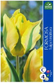 Tulpės Formosa 4 vnt.