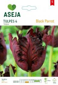 Tulpių svogūnėliai ASEJA Black Parrot, 4 vnt., 53933 (5)