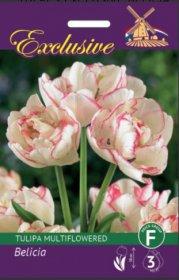 Tulpės EXCLUSIVE Belicia multiflowered 11/12 4 svog., 5068