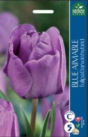 Tulpės BLUE AIMABLE 5 vnt.