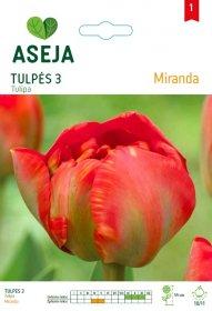 Tulpių svogūnėliai ASEJA Miranda, 3 vnt., 53926 (1)