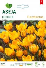 Krokų svogūnėliai ASEJA Fuscotinctus, 6 vnt., 53927 (2)