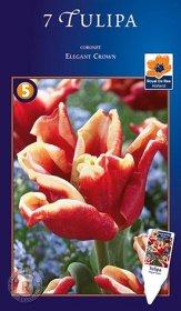 Coronet tulpės Elegant Crown svogūnėliai, 7 vnt., 12/+, 618415