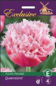 Tulpės EXCLUSIVE QUEENSLAND fringed 11/12 5 svog., 3347