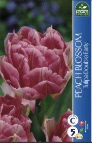 Tulpės PEACH BLOSSOM 5 vnt.