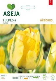 Tulpių svogūnėliai ASEJA Akebono, 4 vnt., 53929 (5)