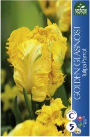 Tulpės Golden Glasnost 5 vnt.