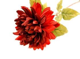 Dirbtinė gėlė jurginas NOVELLY HOME FS-3389/ZN/R