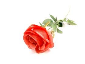 """Dirbtinė gėlė rožė """"Novelly Home"""", raudonos sp. 55cm., DY1-276E"""