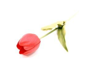 "Dirbtinė gėlė tulpė ""Novelly Home"", raudonos sp. 51 cm,  GFN-039A"