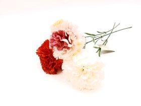 """Dirbtinė gėlė gvazdikas """"Novelly Home"""",baltos sp. 45 cm,  DY1-3122A"""