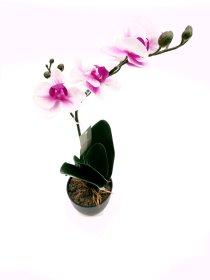 """Dirbtinis augalas vazonėlyje  """"Novelly Home"""", kreminė su violetine sp. 46 cm,  DY1-1787"""