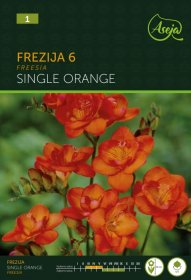 Frezijų svogūnėliai Single Orange, 53531 (1) ASEJA