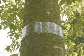 Lipni medžių juosta nuo skruzdžių Nortene, 5 x 500 cm.