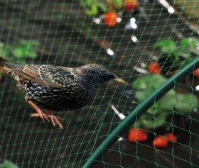 Tinklas nuo paukščių, lietas HDPE, UV apsauga   2 x 10 m, 18 x 18 mm.