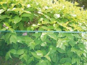 Plastikinis tinklas SQUARE, akis 10 x 10 mm, 0,5 x 5 m, žalios spalvos