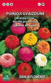 Sėklos gėlių, gvaizdūnė   (02-07mėn).