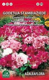 Sėklos gėlių, godecija, stambiažiedė (02-07mėn)