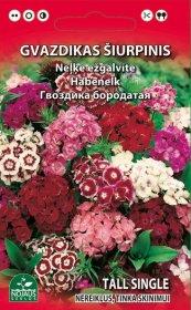 Sėklos gėlių, gvazdikas šiurpinis   (02-07mėn).