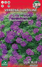 Sėklos gėlių, verbena svyranti Standart Moss Verbena Lilac Blue (Purple)