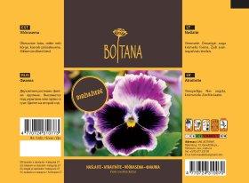 Sėklos gėlių, Našlaitė Viola Swiss Giants mixed