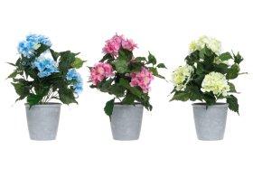 Dirbtinė hortenzija vazonėlyje