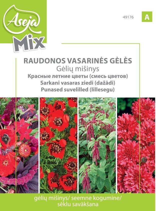 Raudonos vasarinės gėlės ASEJA 49176