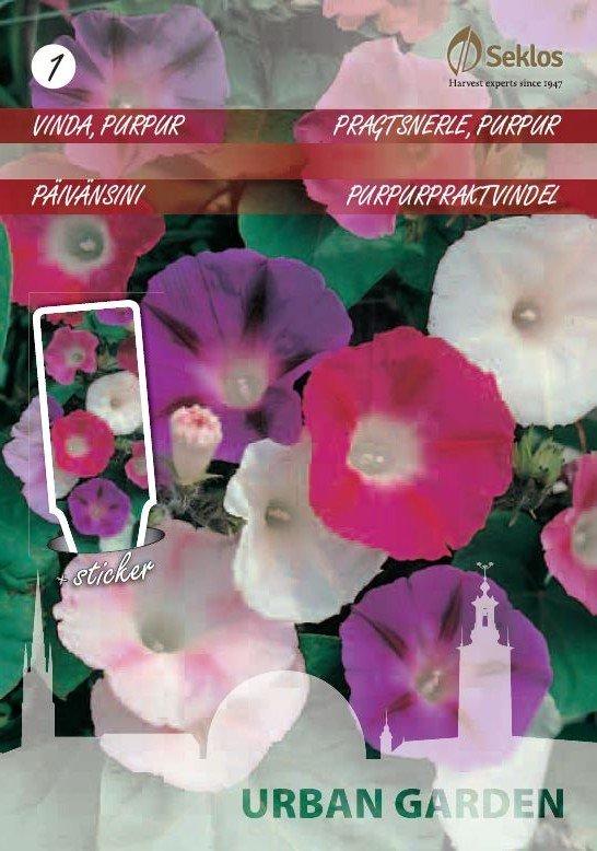 Gėlių sėklos URBAN GARDEN